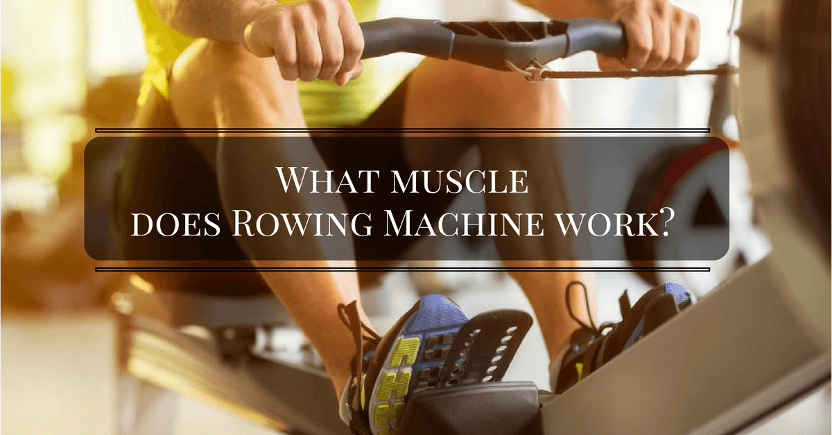What Muscles Does Rowing Machine Work Strong Muscle Growth